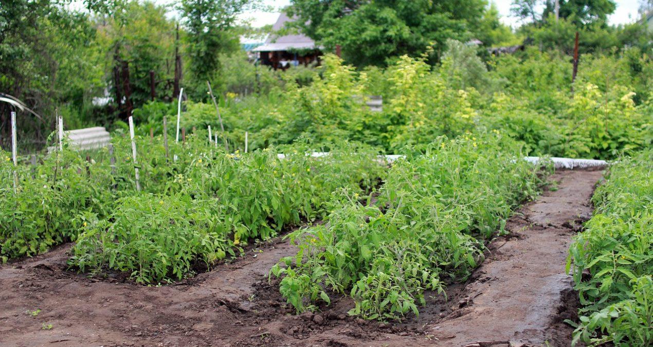 Dégâts pelouse blaireau : Astuce pour se débarrasser des blaireaux